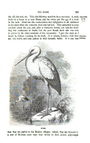 Pagina 325