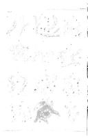 Pagina xxiv
