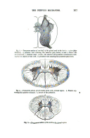 Pagina 163