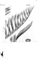 Pagina 418