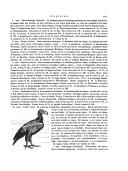 Pagina xxv