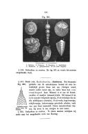 Pagina 311