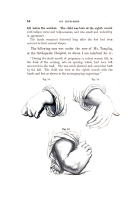 Pagina 54